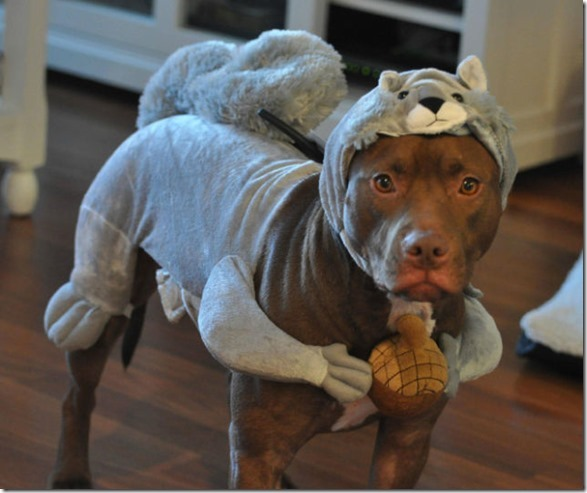 cat-dog-outfit-1