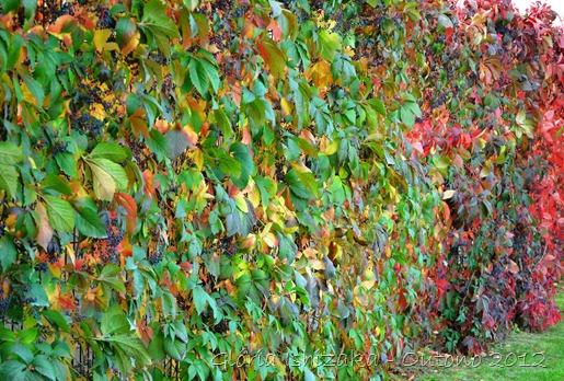 Glória Ishizaka - Folhas de Outono - Portugal 31