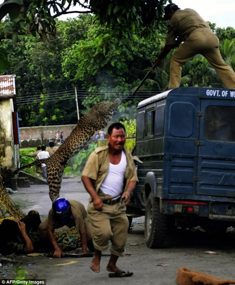 A forest guard aims his rifle as he is attacked by the leopard. One villager lies injured on the ground as while another runs for his life