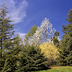 Arnold Arboretum in Boston