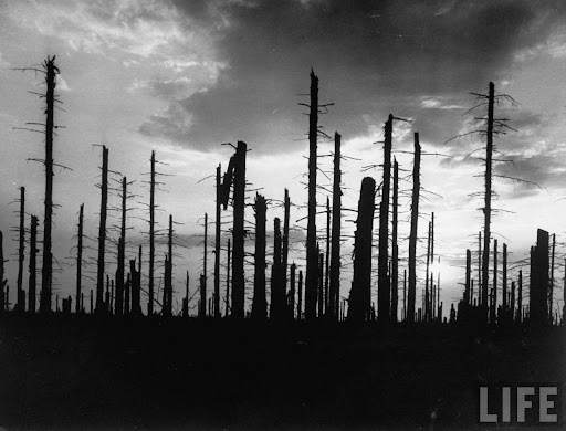 Battle of Hürtgen Forest: Battle area of WW II which is now the ghostly remains of a forest of firs, battered tree trunks silhouetted against the sky.