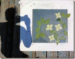 Kousa Dogwood, a work in progress by Sue Reno, Image 2