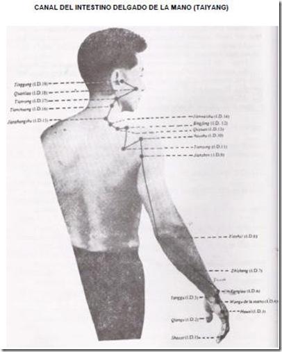 Canal del intestino delgado