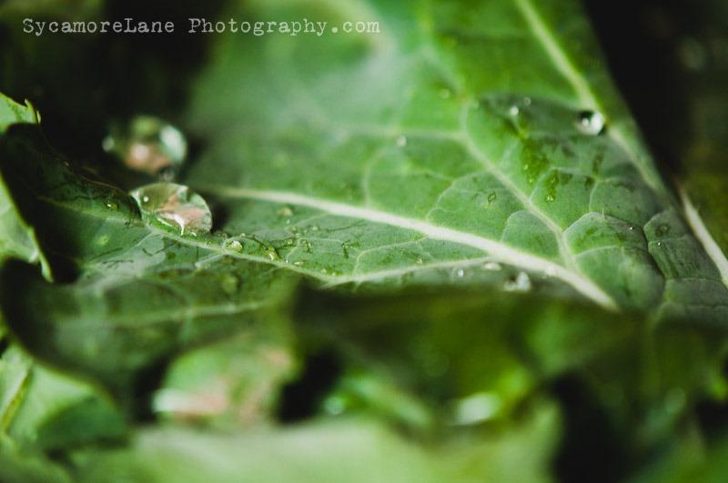 SycamoreLane Photography-Garden 2014 (3)