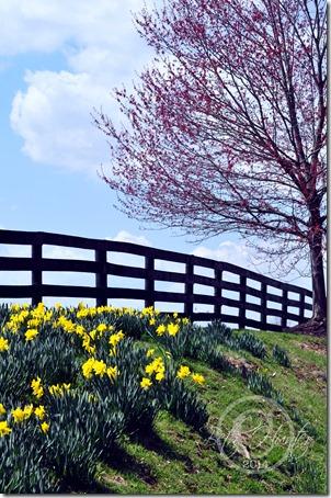 cr-springtime-pastoral-wb-3