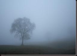 árbol en la niebla