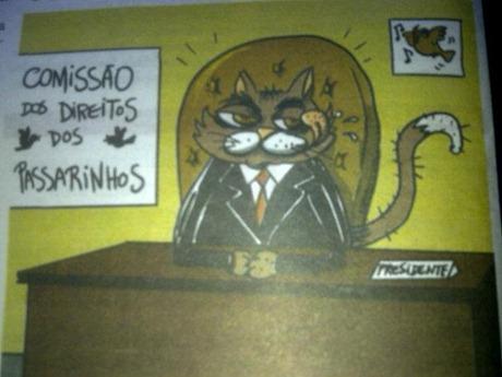 gato presidente