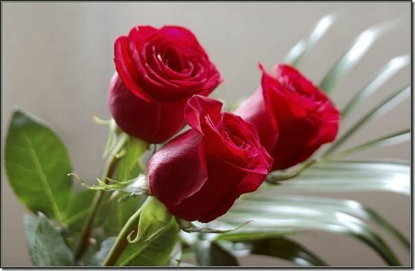 flor día del amor (30)