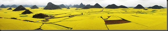 Canola Flower Fields, China2