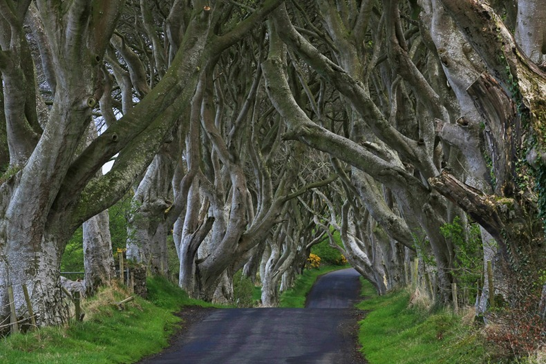 dark-hedges-6
