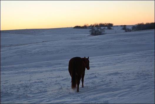 snow horses 101