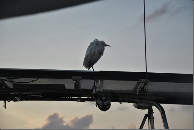 bird hitching a ride on sailboat from indonesia to phillippines