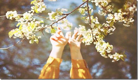 reach,nature,photography,spring-ccaffdfe1c69e74faa1081ce0ee5fe61_h_large