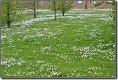 Warwick University D3100  18-05-2012 12-46-25