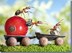 fantasy-world-of-ants9