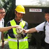 アブラヤシを守るフクロウ(フクロウはアブラヤシの果実を食害するネズミを捕食するためアブラヤシ・プランテーション内で飼育されている)/ Many oil palm plantations have their own owls: Owls are expected to feed on rats, which damage oil palm fruits.