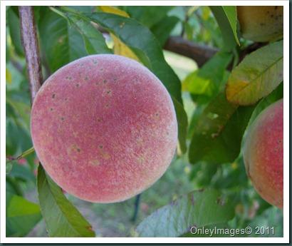 peaches0716 (3)