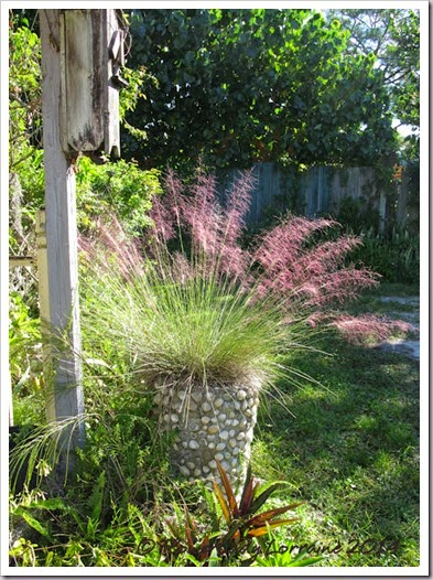 11-14-pink-muhly