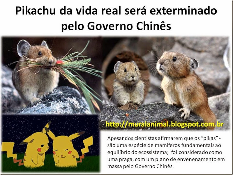 Pikachu da vida real será envenenado