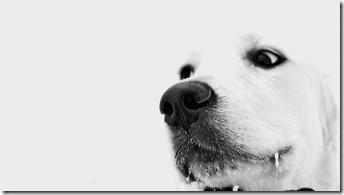 poze desktop căţel