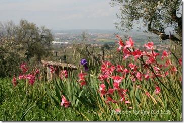La Selva i fiori 8