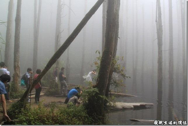 南投-忘憂森林