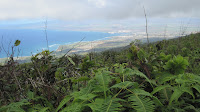 Waihe'e Ridge Trail.