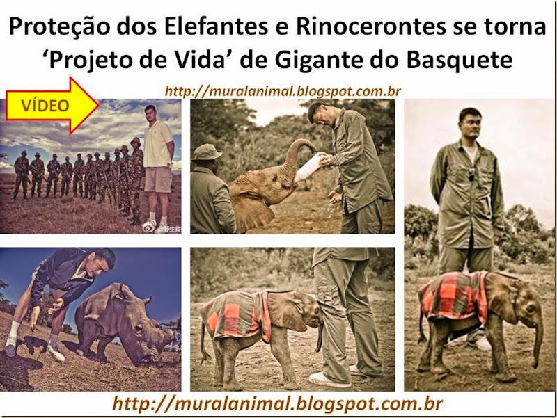 protecao elefantes-rinocerontes