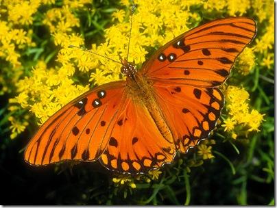 imagini fluturi