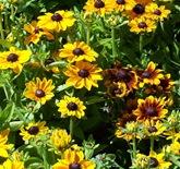 flowers dunedin