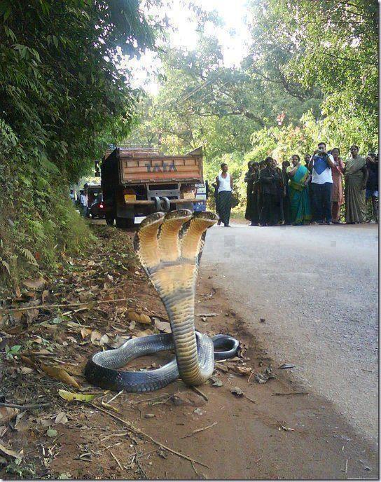 3head_snake
