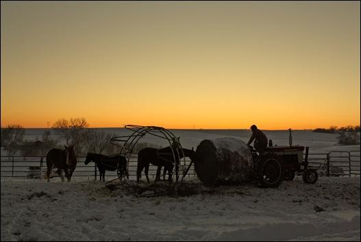 snow horses 135a