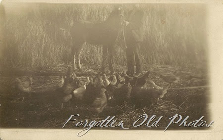Postcard new foal and chickens Azo Diamonds ML Antiques Erhard