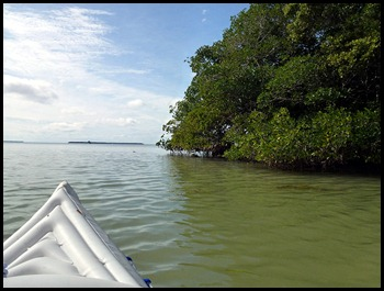 03b - paddled along the mangroves