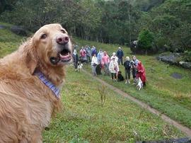 Dogs Trekking 4 (260)