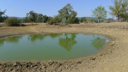 Mumcular valley turtle pond