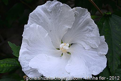 Glória Ishizaka - minhas flores - 2012 - 26