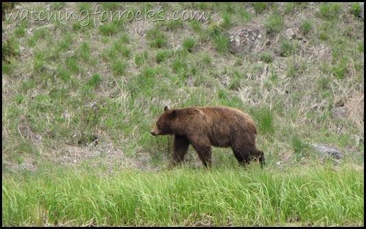 IMG_1620Black Bear