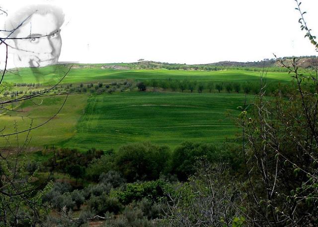 Vega de Granada.jpg