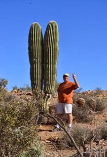 Peace Cactus