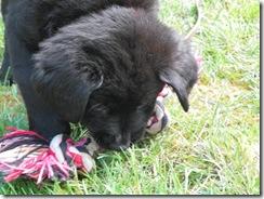 puppy training 02