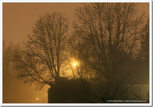 150123_fog_night1