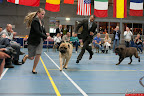 20130510-Bullmastiff-Worldcup-1199.jpg