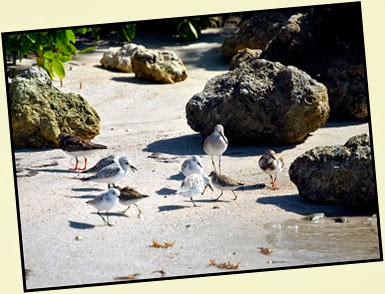 17f - Lots of shore birds
