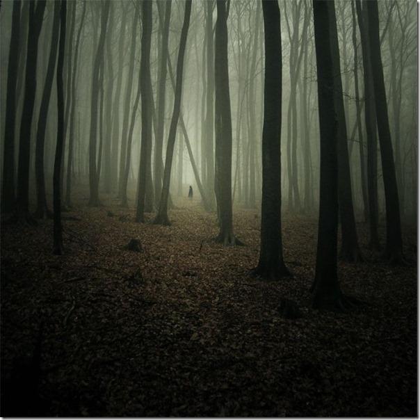 Florestas sombrias (1)