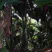 seychelles9_20070412_1258847468.jpg