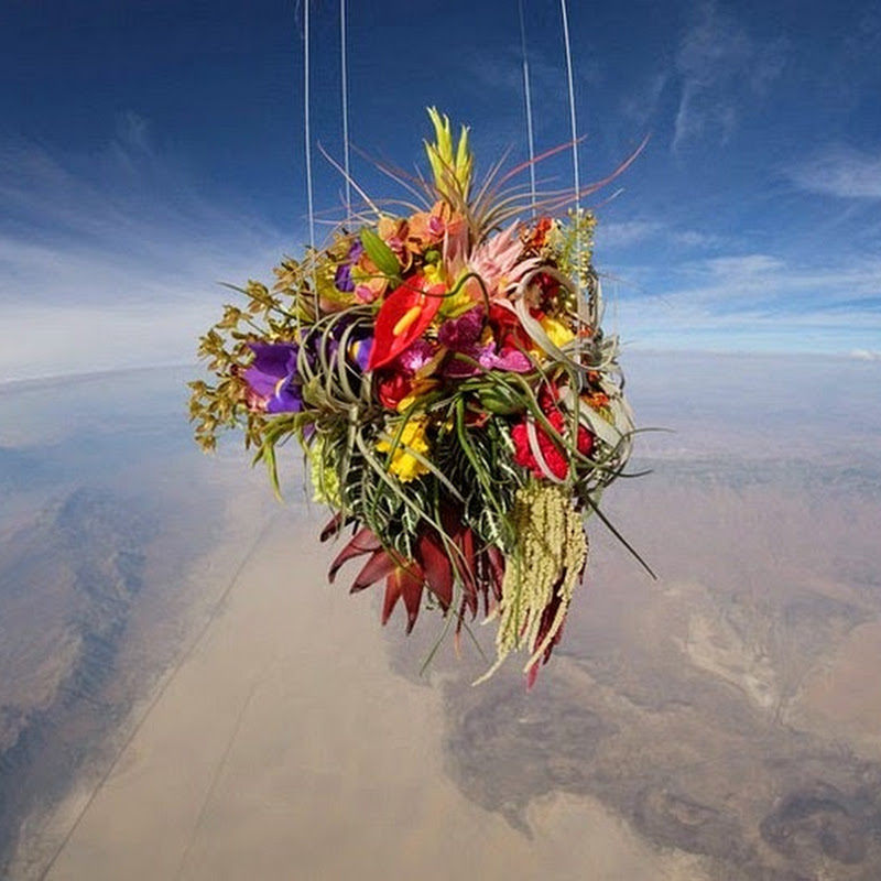 Japanese Artist Launches Plants Into Space