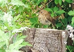 norma's baby robin7