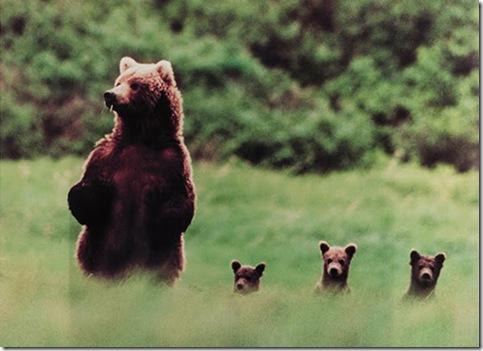 ours et petits