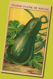 french-zucchini-seed-packet_i-G-35-3595-VZO2F00Z
